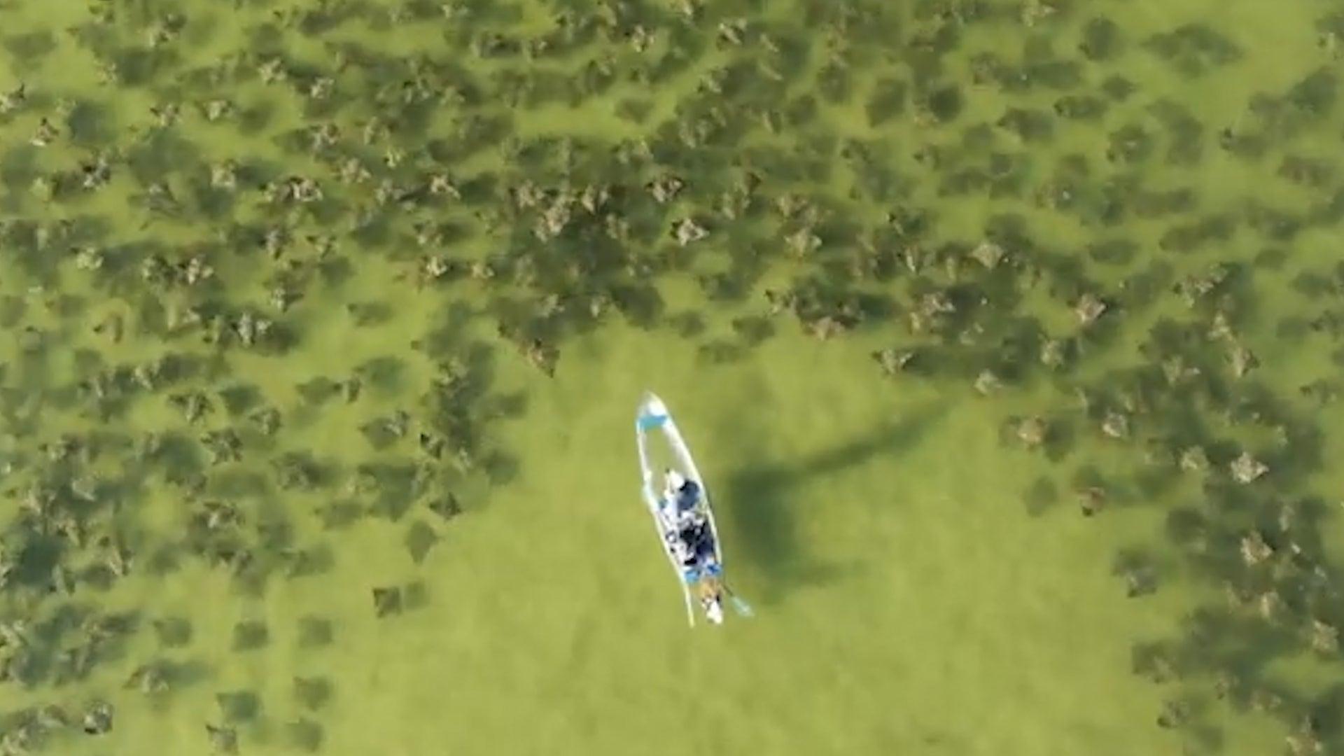Florida Kayaker Encounters Massive School of Cownose Rays