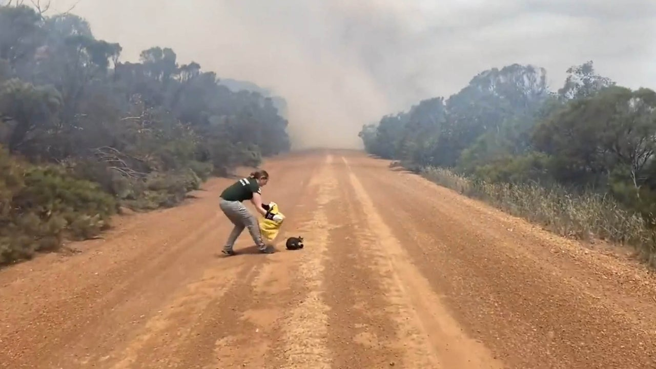 Animal Rescuers Find Apocalyptic Scene on Australia's Kangaroo Island