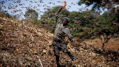 Stephen Mudoga, 12, the son of a farmer, chases away a swarm of locusts on his farm as he returns home from school at Elburgon, in Nakuru county, Kenya, on March 17, 2021. It's the beginning of the planting season in Kenya, but delayed rains have brought a small amount of optimism in the fight against the locusts, which pose an unprecedented risk to agriculture-based livelihoods and food security in the already fragile Horn of Africa region. (AP Photo/Brian Inganga)