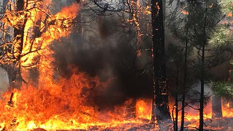 The Magnum Fire, which began on June 8, 2020, in the Kaibab National Forest in Arizona, had burned more than 30 square miles as of Sunday, June 14, 2020. (Kaibab National Forest)