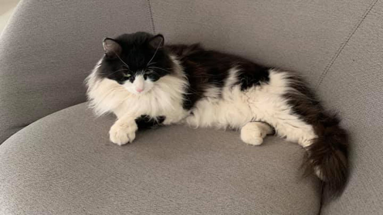 Diamond the cat was missing from its Montecito, California, home for 475 days. (Montecito Community Connect & Lost and Found/Facebook)