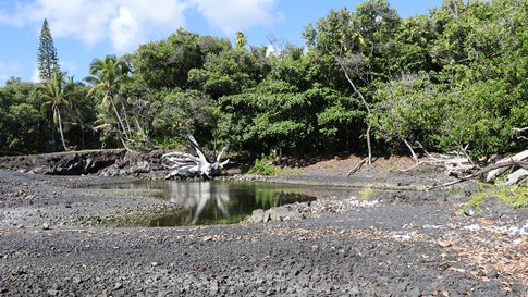 In Hawaii, New Marine Life Emerges on Beach Formed After Kilauea Erupted