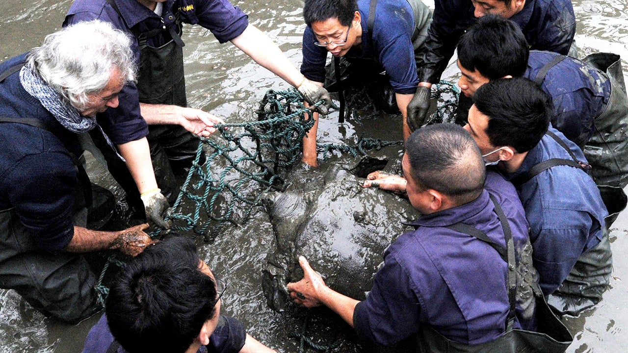 Researchers lift a female Yangtze giant softshell turtle out of the water at a zoo in Suzhou in eastern China's Jiangsu province on April 7, 2016. The only known female member of one of the world's rarest turtle species died at the zoo on Saturday, April 13, 2019. (Chinatopix via AP)