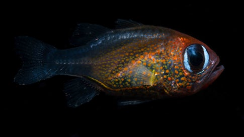 California Researchers Discover 71 New Species in 2019