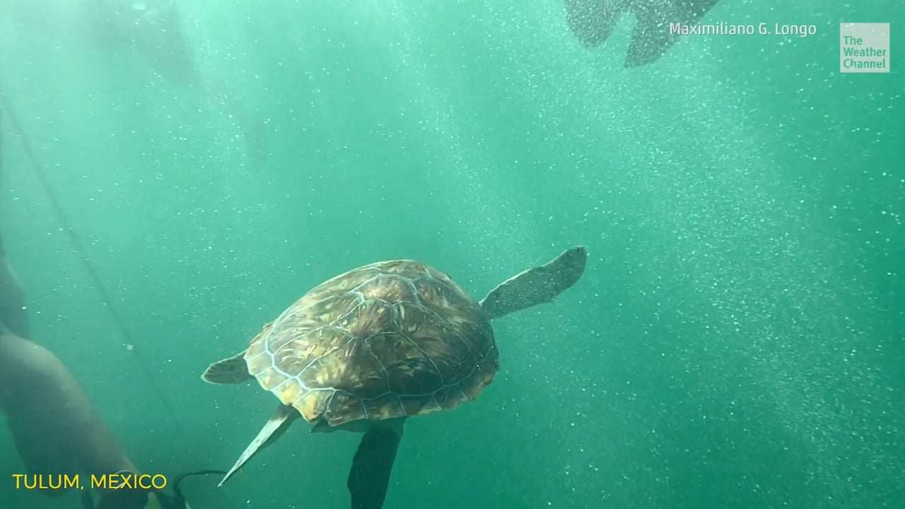 Stunning video of a sea turtle