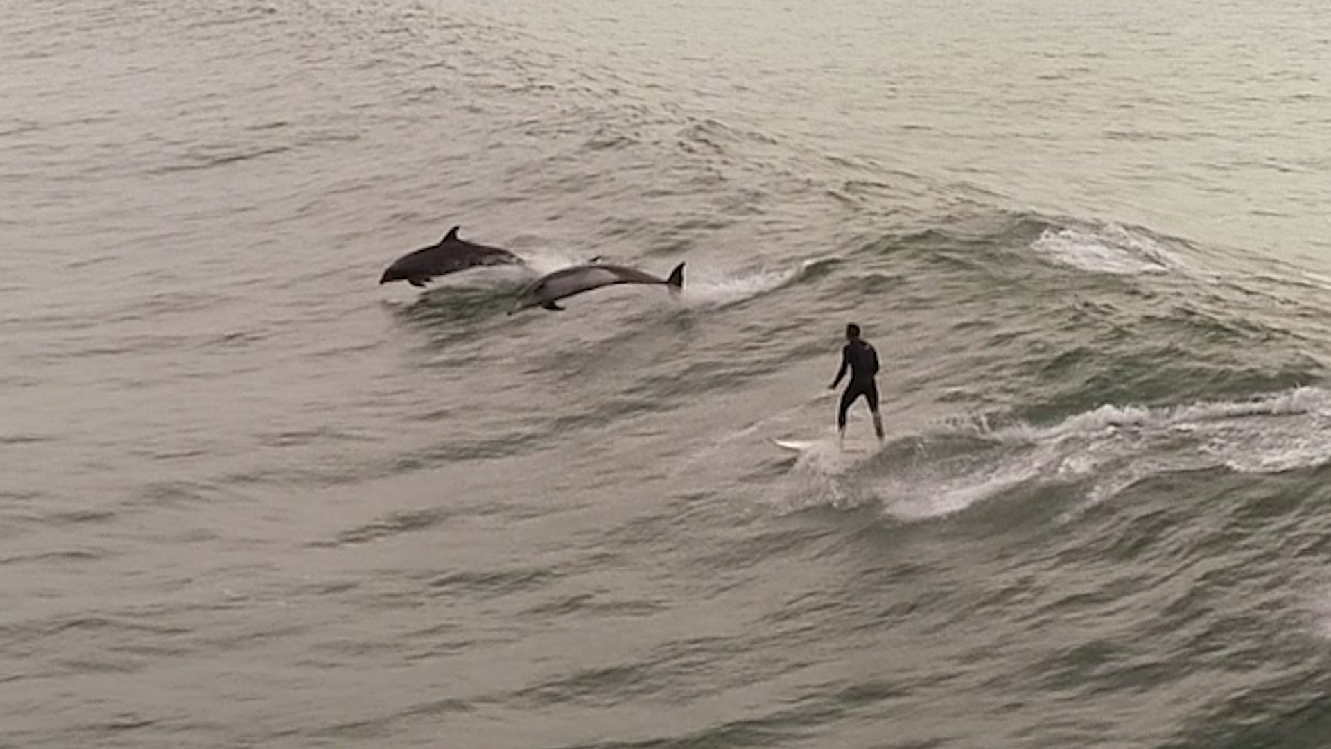 Dolphins Decide to Surf Same Wave as Ventura County Man