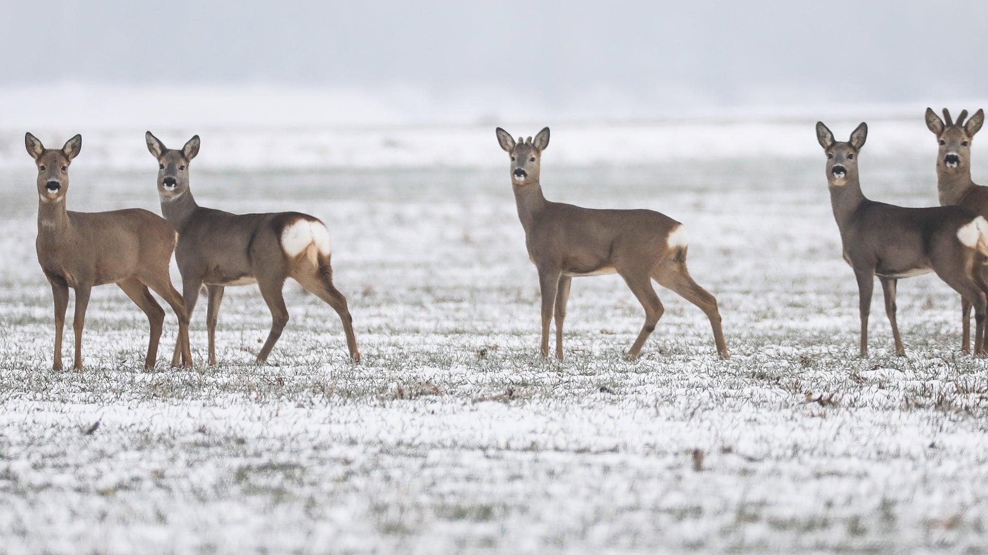 'Zombie Deer Disease' Affecting 24 U.S. States