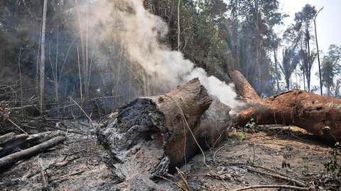 Smoke billows from a burning tree trunk in Porto Velho, Rondonia state, in the Amazon basin in west-central Brazil, on August 24, 2019. (Carl de Souza/AFP via Getty Images)