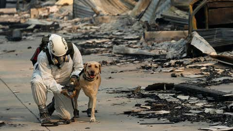 A search and rescue worker tends to his dog while searching for human remains at the Camp Fire, Friday, Nov. 16, 2018, in Paradise, California. (AP Photo/John Locher)