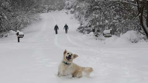 Josie, an English retriever plays in the snow as her owners, Dawn and Mark Lundblad walk a snow-covered Sandy Cove Drive, Sunday, December 9, 2018, in Morganton, North Carolina. (AP Photo/Kathy Kmonicek)