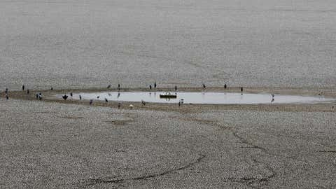 Birds rest by stagnant water in the dried up puzhal reservoir on the outskirts of Chennai, capital of the southern Indian state of Tamil Nadu, Wednesday, June 19, 2019. Millions of people are turning to water tank trucks in the state as house and hotel taps run dry in an acute water shortage caused by drying lakes and depleted groundwater. Some private companies have asked employees to work from home and several restaurants are closing early and even considering stopping lunch meals if the water scarcity aggravates. (AP Photo/R. Parthibhan)