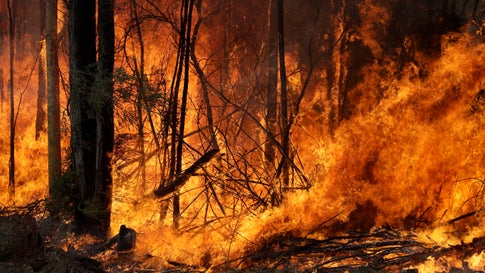 An intentionally lit controlled fire burns intensely near Tomerong, Australia, Wednesday, Jan. 8, 2020, in an effort to contain a larger fire nearby. Around 2,300 firefighters in New South Wales state were making the most of relatively benign conditions by frantically consolidating containment lines around more than 110 blazes and patrolling for lightning strikes, state Rural Fire Service Commissioner Shane Fitzsimmons said. (AP Photo/Rick Rycroft)