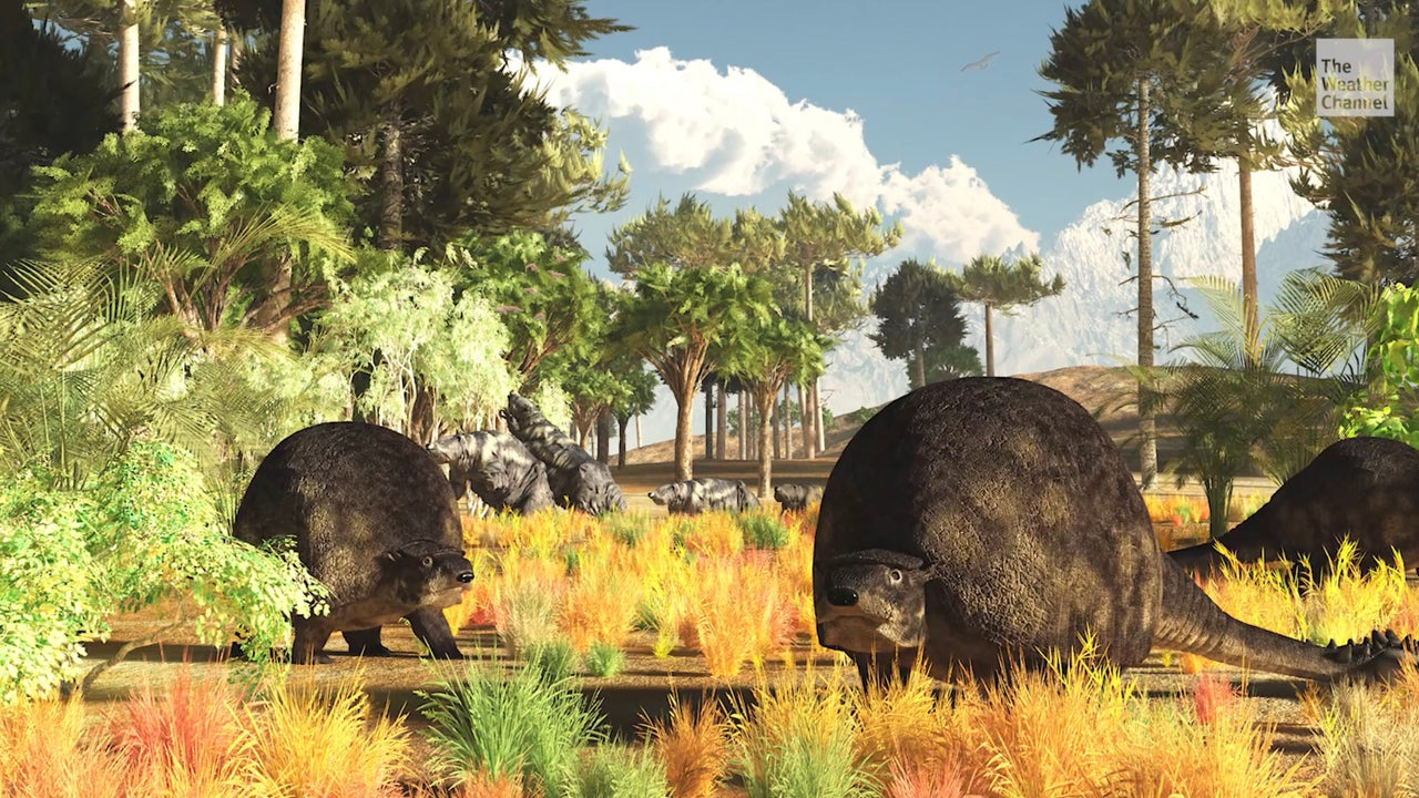 The fossils of four huge armadillo-like creatures have been found in Argentina.