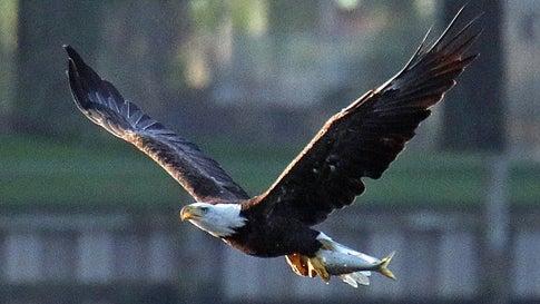 Endangered Species Act Weakened by Trump Administration Rule Changes
