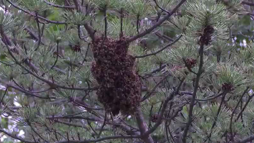 Hurricane Michael Devastated Bee Population in Florida