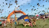 Bees Swarm Concert Goers at Michigan Music Festival
