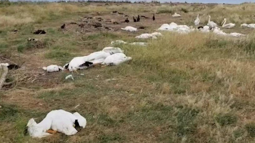 Hailstorm Takes Catastrophic Toll on Montana's Bird Population