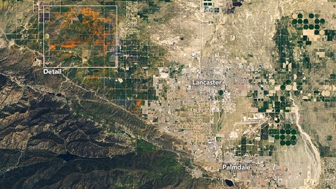 NASA's Operational Land Imager (OLI) on the Landsat 8 satellite acquired these images of vast poppy blooms in the Antelope Valley California Poppy Reserve on April 14, 2020. These images were taken when the valley's blooms were thought to be at or near their peak. (NASA/Earth Observatory/Lauren Dauph)