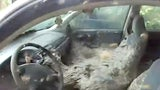 Wasps Build Gigantic Nest in Abandoned Car in Louisiana