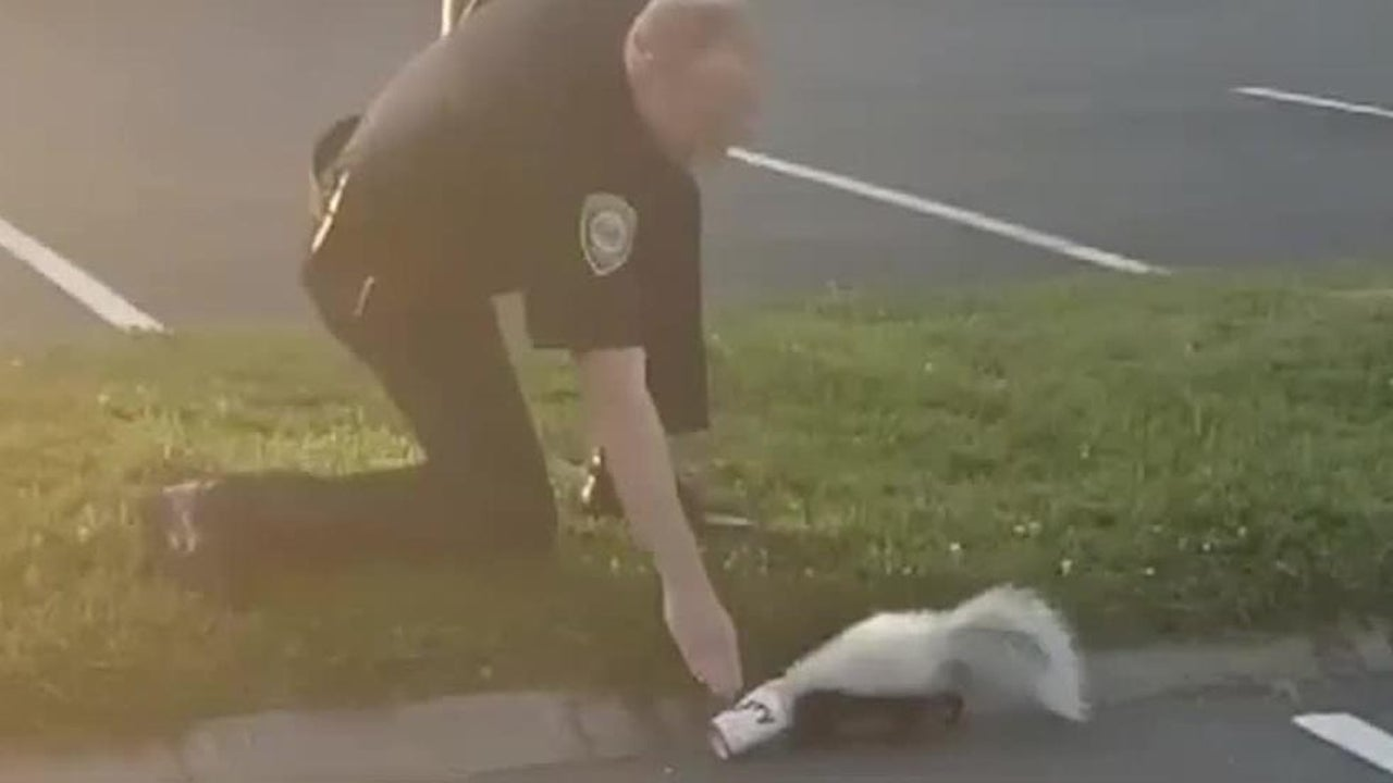 Skunk Gets Help from Officer, But Punishes Him After