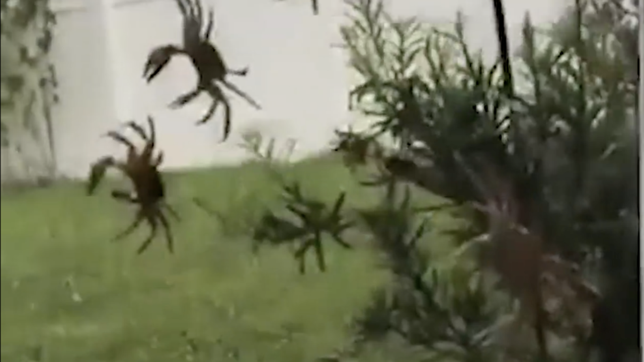 Dozens of Crabs Invade House in Port St. Lucie, FL