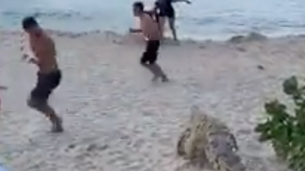 Crocodile Walks Onto Crowded Beach in Colombia