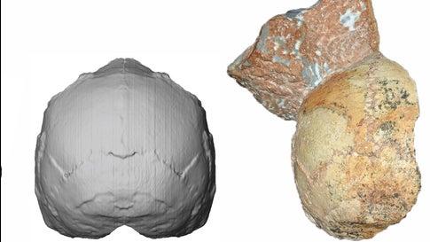 Forscher identifizieren ältesten menschlichen Knochen außerhalb Afrikas