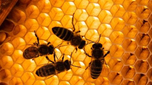 """""""Ohne Bienen kein Leben"""": So ernst ist die Lage wirklich"""
