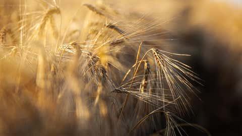 """28.06.2019, Niedersachsen, Wrestedt: Ein Landwirt erntet mit einem M‰hdrescher Gerste auf einem Feld. Mit eher durchschnittlichen Ergebnissen rechnen die nieders‰chsischen Landwirte f¸r die in diesen Tagen beginnende Getreideernte. (zu dpa """"Getreideernte in Niedersachsen beginnt"""") Foto: Philipp Schulze/dpa +++ dpa-Bildfunk +++"""