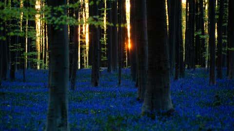Der Wald Die blaue Haut