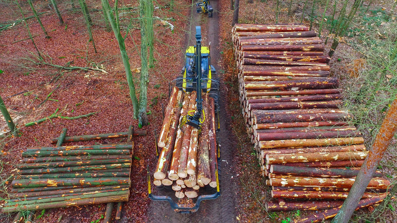 Klimawandel beschert so viel Holz wie selten zuvor