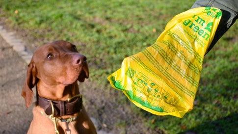 Klimaneutral Gassi-Gehen: Städte testen plastikfreie Hundekotbeuteln