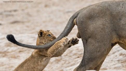 Comedy Wildlife Photography Awards: Die lustigsten Tierbilder 2019