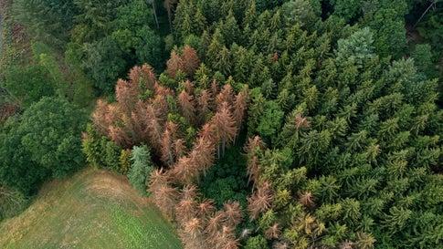 Trockenheit erfordert andere Baumarten: So sieht der Wald der Zukunft aus