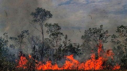 Zahl der Waldbrände in Kolumbien erlebt traurigen Höhepunkt
