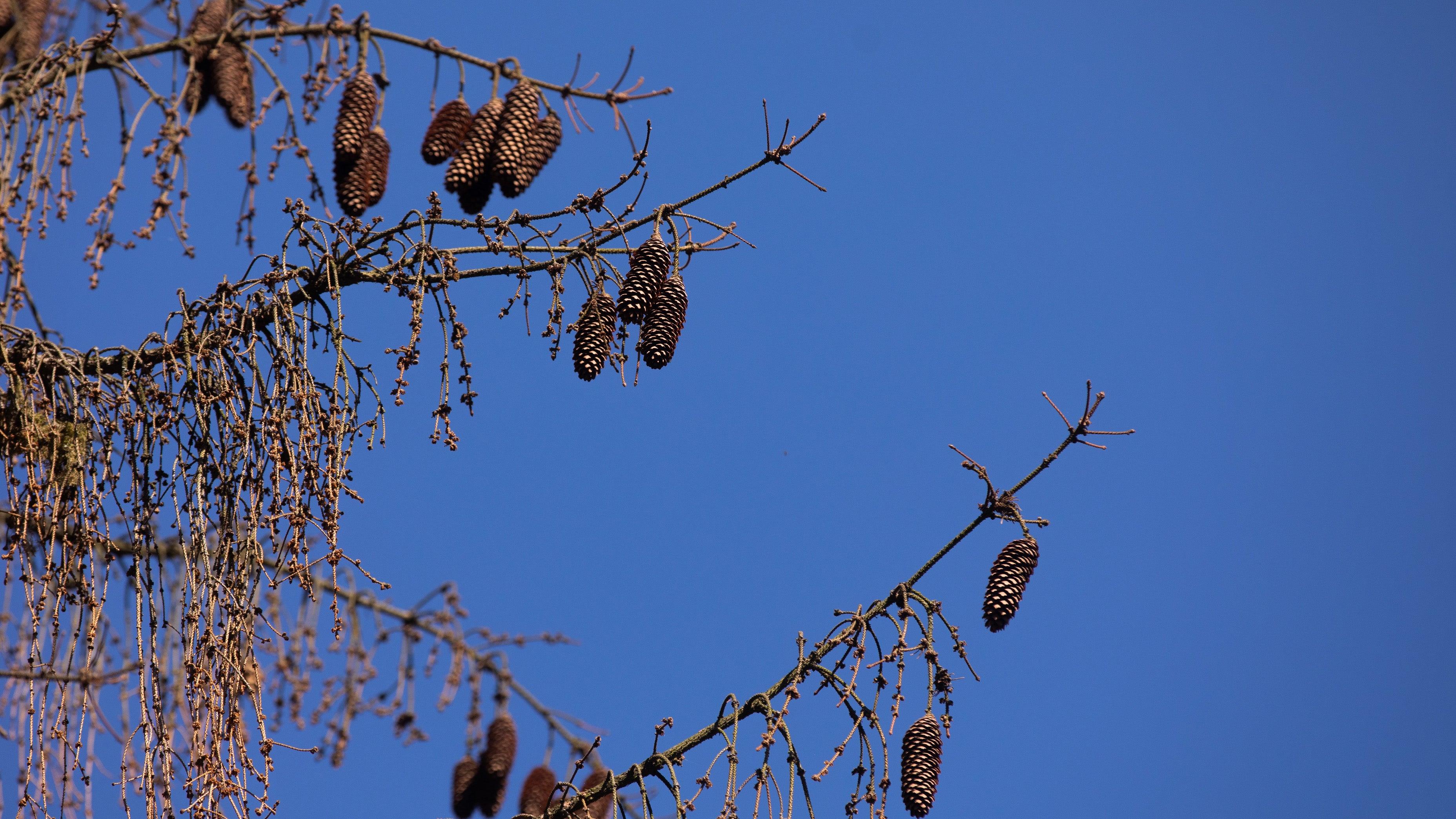 Pilze, Käferplage, Schleimfluss: So schlimm steht es um Deutschlands Bäume wirklich