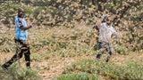 Ostafrika erlebt schlimmste Heuschreckenplage seit 25 Jahren