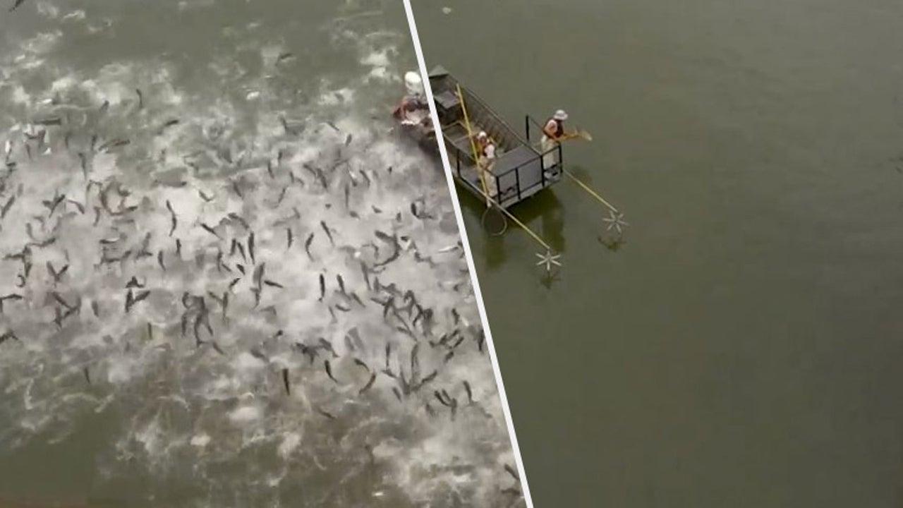 Fischen mit Elektroimpulsen hat sich vielerorts als Fang-Praxis etabliert. Warum, zeigen diese Aufnahmen vom Ministerium für Fisch- und Wildtierressourcen in Kentucky.