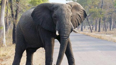 Dürre-Drama: Dutzende Elefanten tot in Nationalpark gefunden