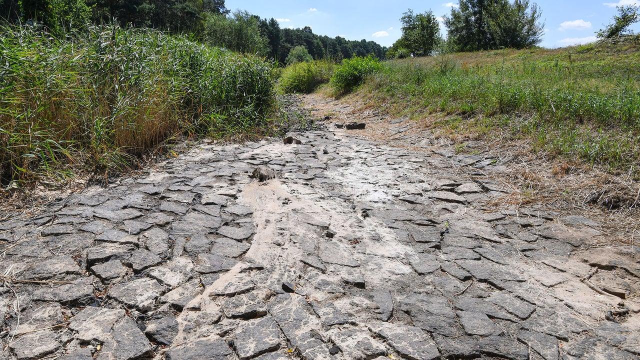 Dürre lässt Flüsse austrocknen: Wo die Lage besonders kritisch ist