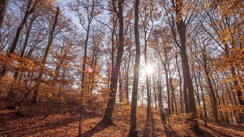 Dürre, Hitze, Borkenkäfer: Hessens Wäldern geht es so schlecht wie nie