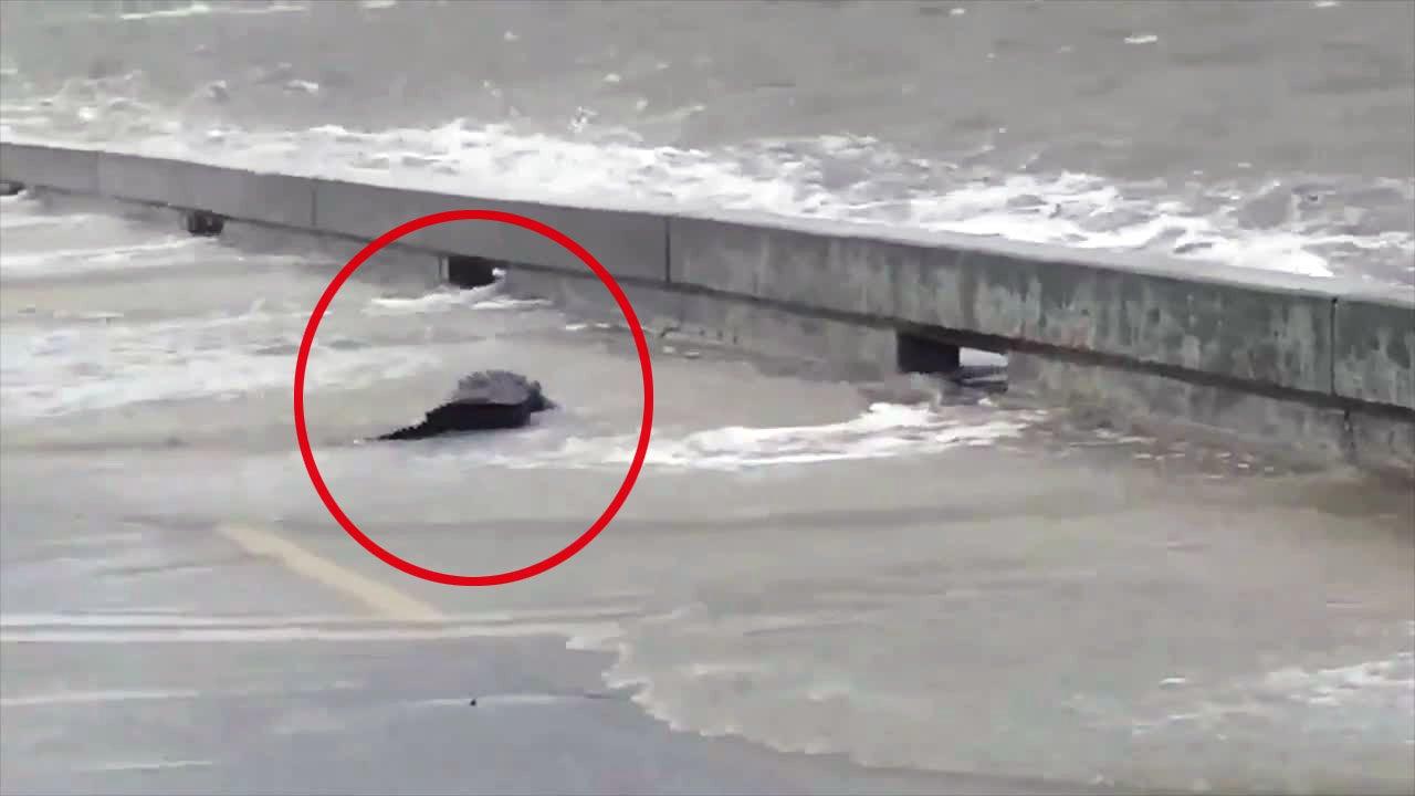Am Wochenende traf der Tropensturm Barry auf die Südstaaten der USA. An der Küste Mississippis zeigt sich ein weiterer unangenehmer Nebeneffekt: Denn mit der Flut werden auch gefährliche Tiere angespült.