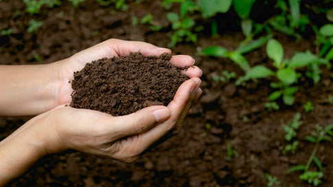 hand holding fertile soil for plant to growing in nature concept.