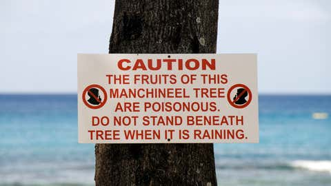 Auch der Hautkontakt mit der Baumrinde ist gefährlich. Foto: GettyImages