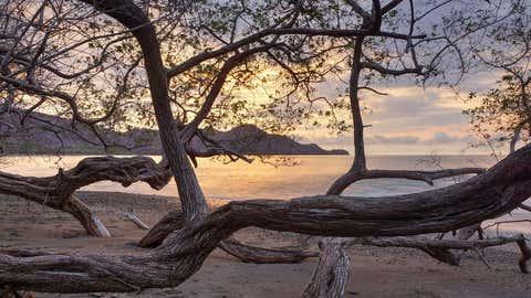 Der Manchinelbaum ist der giftigste Baum der Welt. Foto: GettyImages