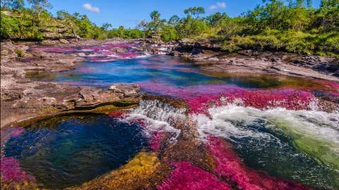 Der Fluss Caño Cristales färbt sich jedes Jahr zwischen September und November. Foto: GettyImages