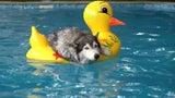 Schwimmen mit Hund: Beachten Sie unbedingt diese Sicherheitstipps