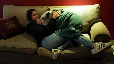 """Luciana Benetti, 16, holds her pet pig Chanchi, given to her as a birthday present the previous year during the COVID-19 pandemic in Buenos Aires, Argentina, Saturday, Sept. 4, 2021. Without Chanchi, """"I wouldn't be me,"""" said Benetti, who often sleeps alongside the 20-kilo (45-pound) Juliana pig that greets her with a squeal of delight when she arrives at her house. (AP Photo/Natacha Pisarenko)"""