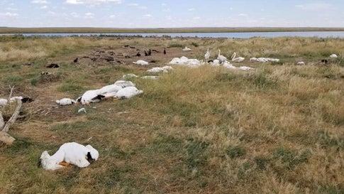 Tausende Vögel sterben in Montana im Hagelsturm