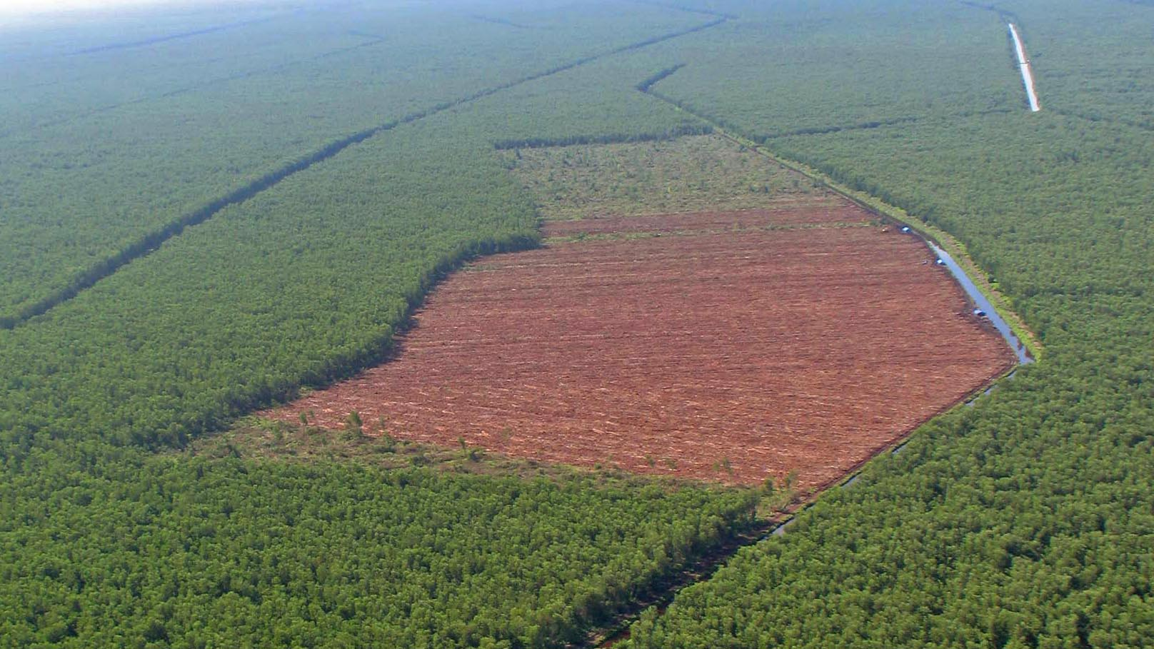 Massiver Schwund an Tropenwald befeuert Klimawandel
